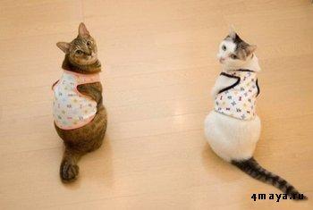 Одежда для вашего домашнего любимца - кошки